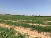 Agriculture Lands for Sale From 50 hectares Over
